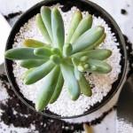 DIY :: Mini Succulent Planters