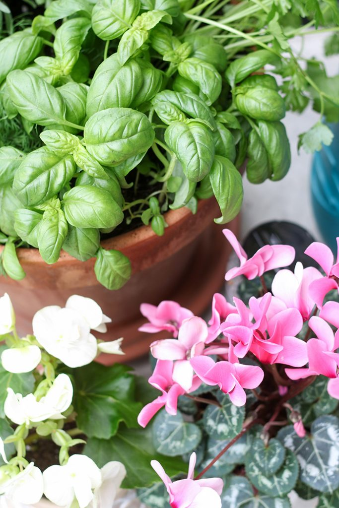 Lifestyle :: 3 Approachable Gardening Ideas